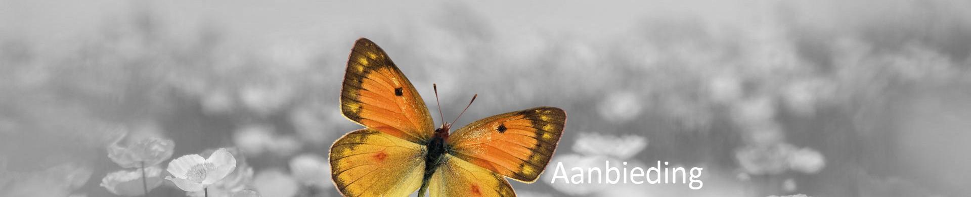 Header.aanbieding.vlinder
